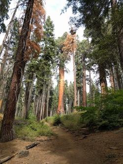 160921_bakersfield_022-2_sequoia