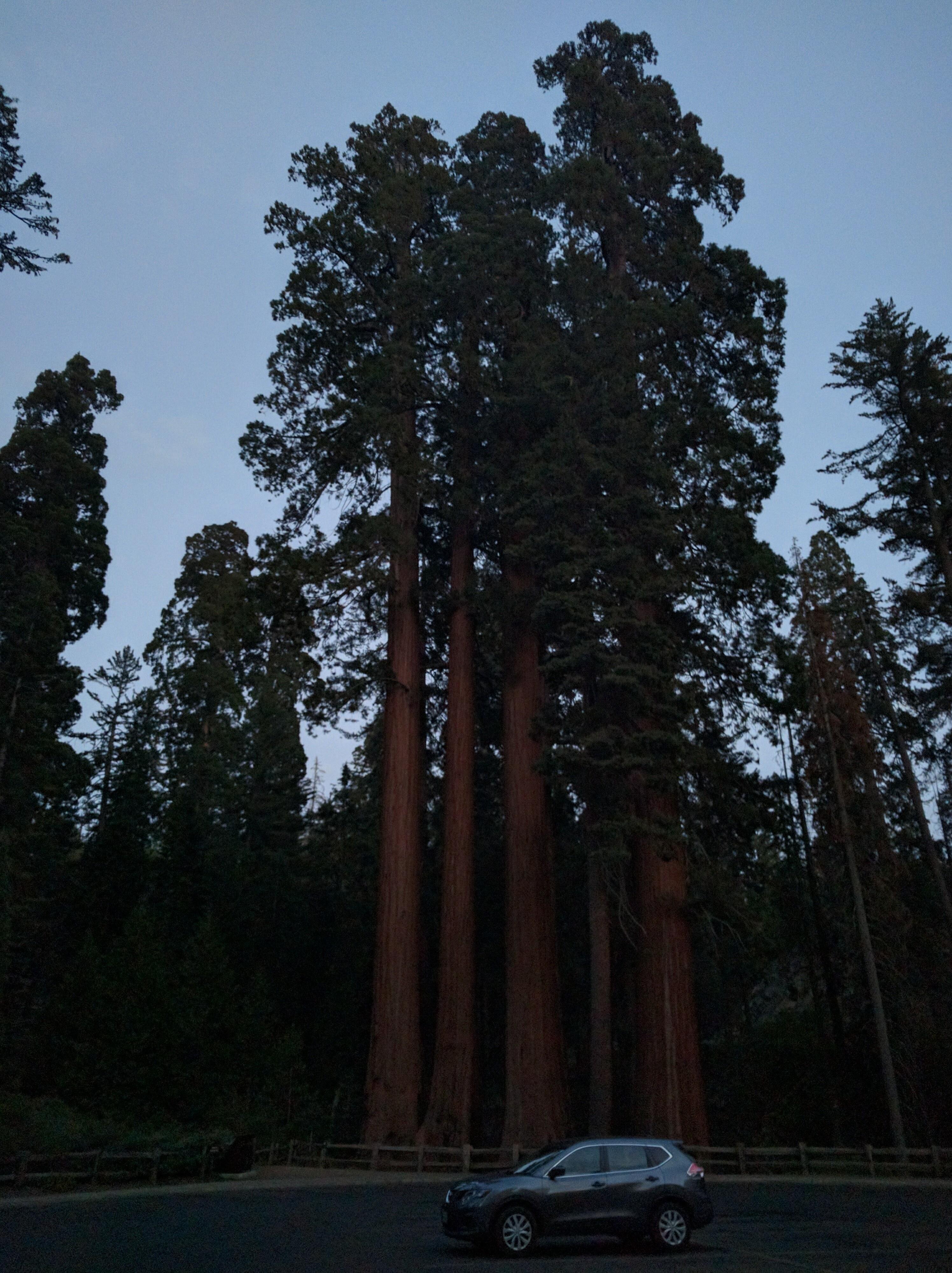 160921_bakersfield_049_sequoia
